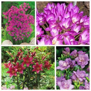 Zestaw roślin w odcieniach fioletu - 4 gatunki roślin - 100 szt.