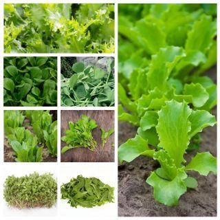Baby Leaf - zestaw 8 odmian nasion