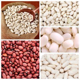Fasola na suche nasiona - zestaw 5 odmian nasion warzyw