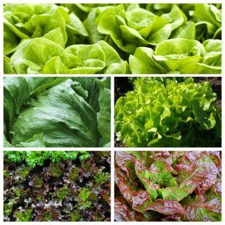 Sałata - zestaw 5 odmian nasion warzyw