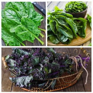Szczaw, jarmuż, szpinak - zestaw 3 odmian nasion warzyw