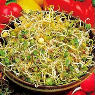 Nasiona na kiełki - Rzodkiewka i soczewica
