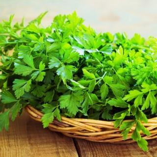 Pietruszka naciowa Natalka - gładkie i aromatyczne liście