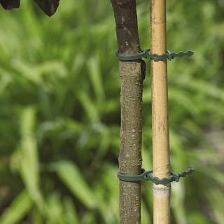 Zapinki do drzew, krzewów i innych roślin w ogrodzie - 170 mm - 30 szt.