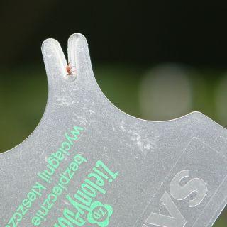 Podręczny wyciągacz kleszczy w formie karty - dla ludzi i zwierząt - Zielony Dom