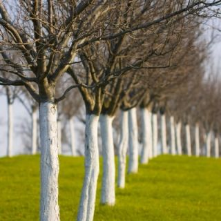 Wapno do bielenia drzew i krzewów - 2 kg