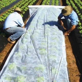 Agrowłóknina wiosenna - ochrona roślin dla zdrowych plonów - 1,60 m x 5,00 m