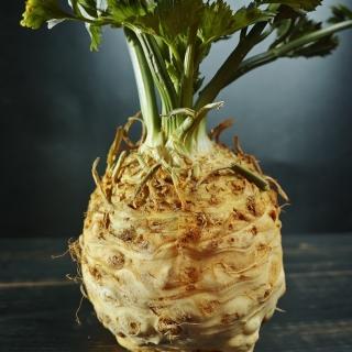 Seler korzeniowy Dolvi - duży korzeń, białokremowy, kruchy miąższ