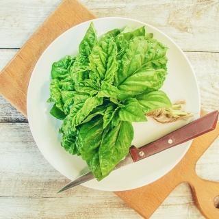 Kuchnie Świata - Bazylia sałatowa - Lettuce Leaved