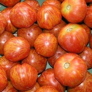 Pomidor Tigerella - wysoki