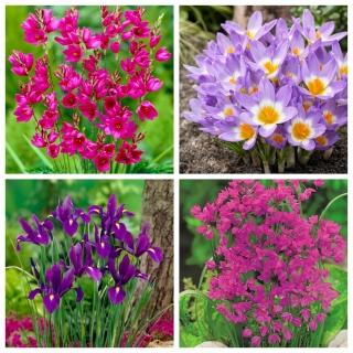 Twórcza wiosna - zestaw 4 gatunków roślin - 350 szt.