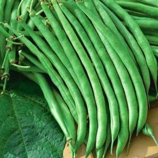 Fasola Jagusia - szparagowa, zielona z bordowymi nasionami