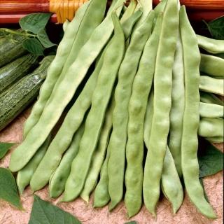 Fasola Marconi nano - szparagowa, zielona, o płaskich strąkach