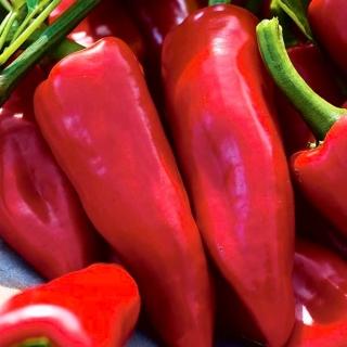 Papryka Wika - słodka, czerwona, polecana do uprawy w tunelach lub gruncie