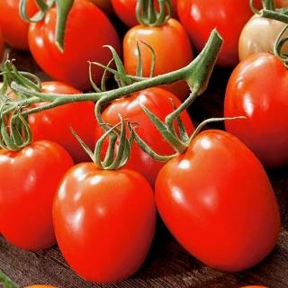 Pomidor Granit - gruntowy, karłowy, średniopóźny, twarde owoce