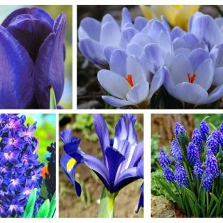 Zestaw kwiatów w kolorze niebieskim - 5 gatunków
