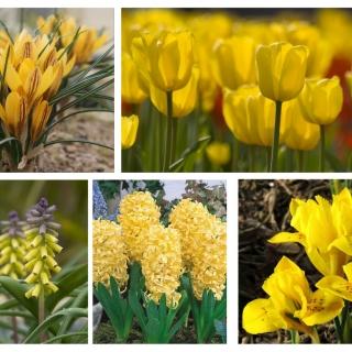 Zestaw kwiatów w kolorze żółtym - 5 gatunków