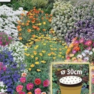Kwietny Dywan - Mieszanka karłowych kwiatów jednorocznych - krążek 30 cm