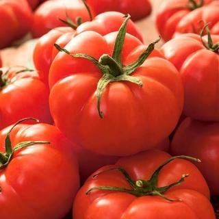 Pomidor Jutrosz - gruntowy, karłowy, wczesny, bardzo plenny, doskonały na soki