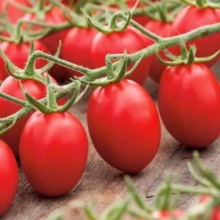 Pomidor Lambert - gruntowy, karłowy, średniowczesny, bardzo plenny, doskonały na przeciery