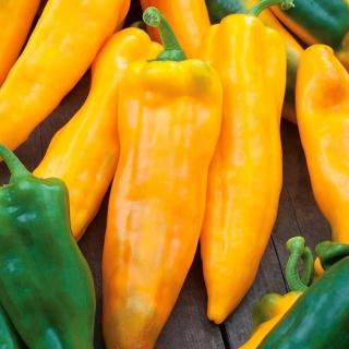 Papryka Corno di Toro Giallo - słodka, żółta