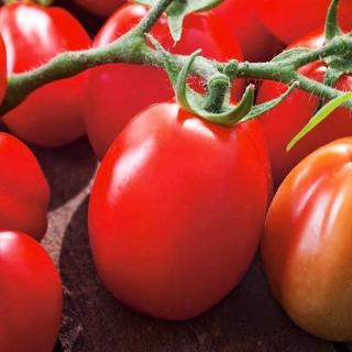 Pomidor Chrobry - gruntowy, karłowy, średniopóźny, bardzo plenny