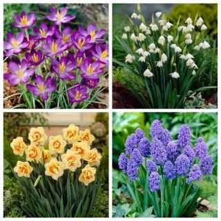 Better Weather - zestaw 4 gatunków roślin - 60 szt.