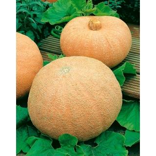 Dynia olbrzymia Melonowa Żółta - 100 gram