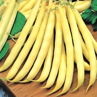 Fasola Maxidor - szparagowa, żółta, smaczna i bezwłóknista