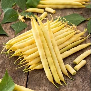 Fasola Basta - karłowa żółta