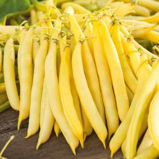 Fasola Korona - szparagowa, karłowa, żółtostrąkowa