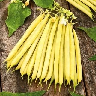 Fasola Laurina - szparagowa, średnio wczesna, żółtostrąkowa