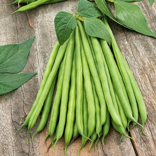 Fasola Syrenka - szparagowa zielona