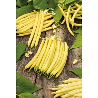 Fasola Erla - szparagowa żółta