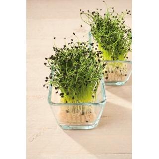 Microgreens - Cebula siedmiolatka - młode listki o unikalnym smaku