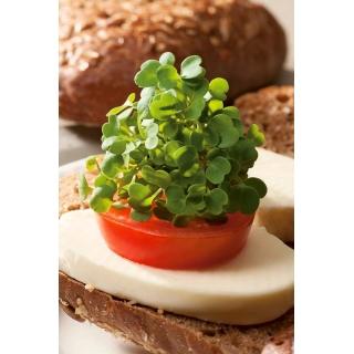Microgreens - Jarmuż zielony - młode listki o unikalnym smaku