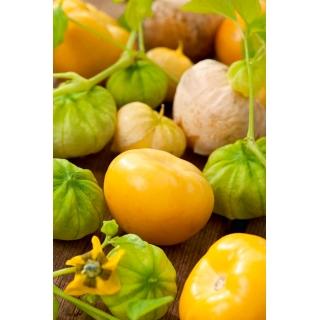 Miechunka pomidorowa Amarylla