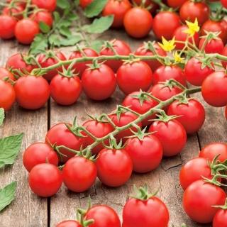 Pomidor Cherrola - koktajlowy do ogrodu i pod osłony