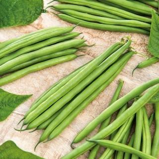 Fasola Finezja - szparagowa, zielona, bardzo odporna na choroby