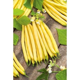 Fasola Luiza - zółta, szparagowa, karłowa - plenna i odporna