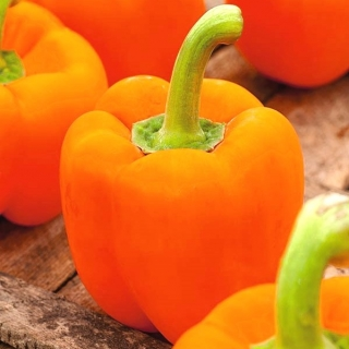 Papryka Lamia - słodka, pomarańczowa, do uprawy w tunelach i gruncie