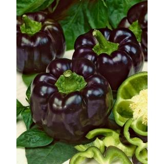 Papryka Zulu - słodka, czarna, typu blok, do uprawy w gruncie