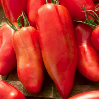 Pomidor Cornabel F1 - szklarniowy wysoki