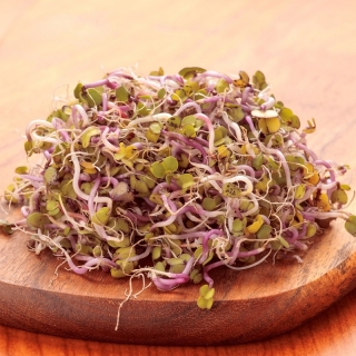 BIO Nasiona na kiełki - Rzodkiewka CHINA ROSE - Certyfikowane nasiona ekologiczne