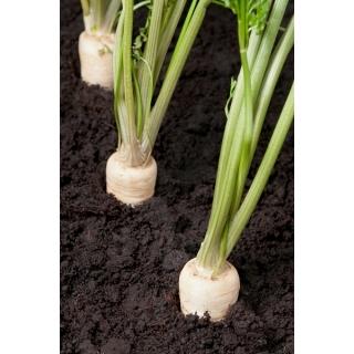 BIO Pietruszka korzeniowa Halblange - Certyfikowane nasiona ekologiczne