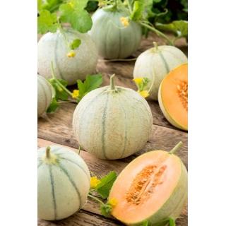 Melon Charentaise - cukrowy