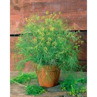 BIO Koper ogrodowy - Certyfikowane nasiona ekologiczne