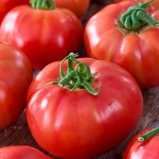 Pomidor Big League - gruntowy i pod osłony, karłowy