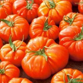 Pomidor Delizia F1 - gruntowy i pod osłony, wysoki