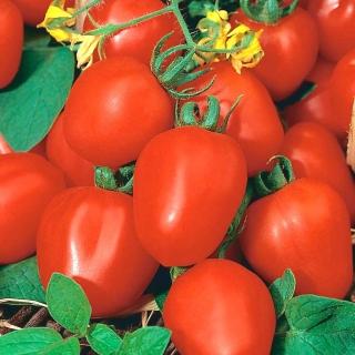 Pomidor Frodo - gruntowy, karłowy